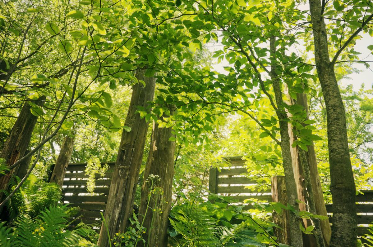 雑木の庭3