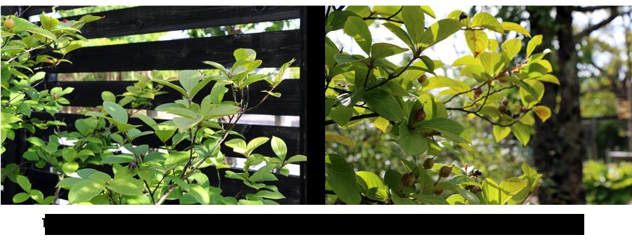 雑木の庭 新潟2