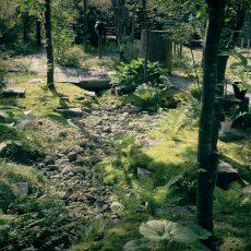 枯山水 × 雑木の庭